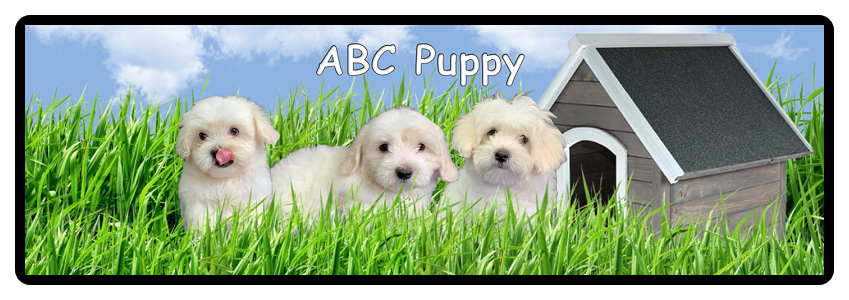 Maltipoo Puppies for Sale Texas Maltepoo Breeders :: ABC Puppy